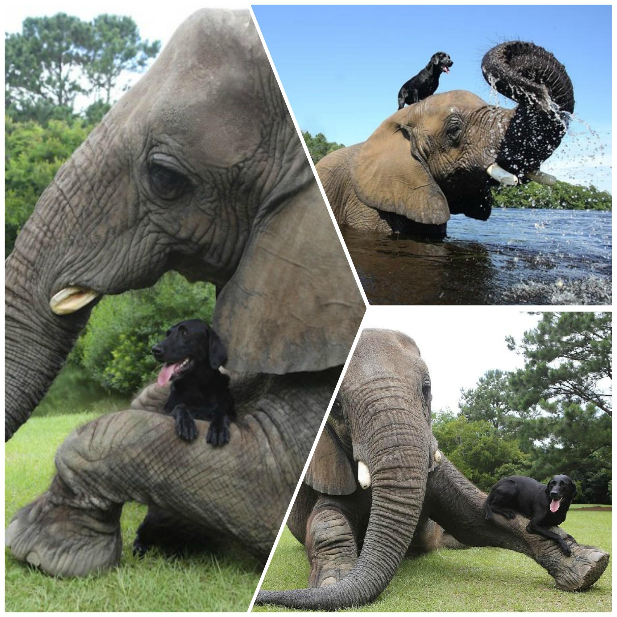 slon i pas